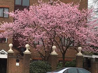 Pink Blossom Tree - showroom